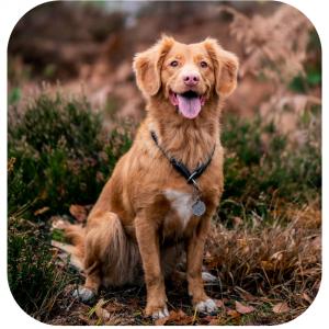 pies stock zdjęcie